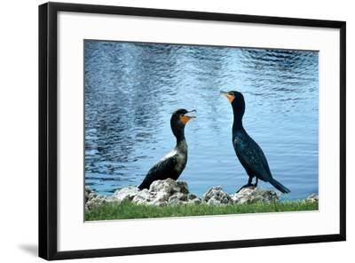 Good Morning-Harold Silverman-Framed Photographic Print