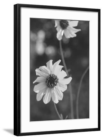 Wildflowers 11-Gordon Semmens-Framed Photographic Print
