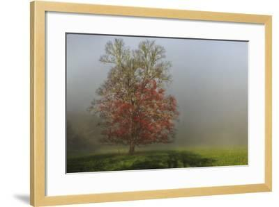 Cades Cove Tree-Galloimages Online-Framed Photographic Print