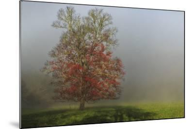 Cades Cove Tree-Galloimages Online-Mounted Photographic Print