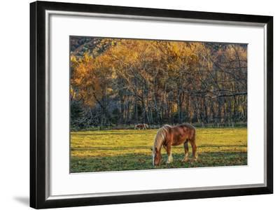 Cades Cove Horses at Sunset-Galloimages Online-Framed Photographic Print