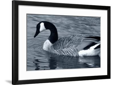 S Goose-Gordon Semmens-Framed Photographic Print