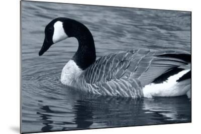 S Goose-Gordon Semmens-Mounted Photographic Print
