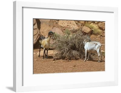 Monument Valley 17-Gordon Semmens-Framed Photographic Print