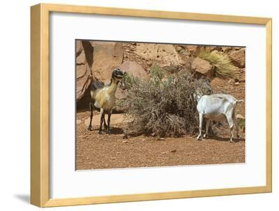 Monument Valley 17-Gordon Semmens-Framed Photographic Print