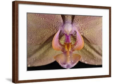 Orchid-Gordon Semmens-Framed Photographic Print