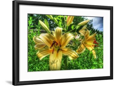 June Lilies-Robert Goldwitz-Framed Photographic Print