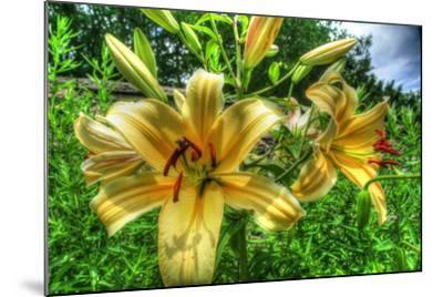 June Lilies-Robert Goldwitz-Mounted Photographic Print
