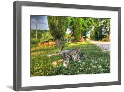 Tuscan Sleepy Cat-Robert Goldwitz-Framed Photographic Print