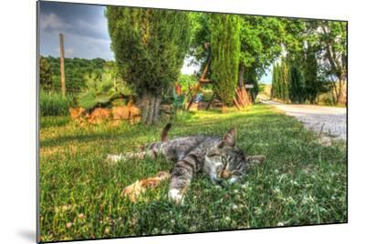 Tuscan Sleepy Cat-Robert Goldwitz-Mounted Photographic Print