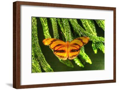 Butterfly 4-Robert Goldwitz-Framed Photographic Print