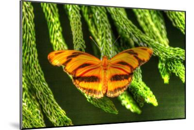 Butterfly 4-Robert Goldwitz-Mounted Photographic Print
