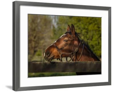 Horse Portrait-Galloimages Online-Framed Photographic Print