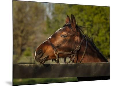 Horse Portrait-Galloimages Online-Mounted Photographic Print