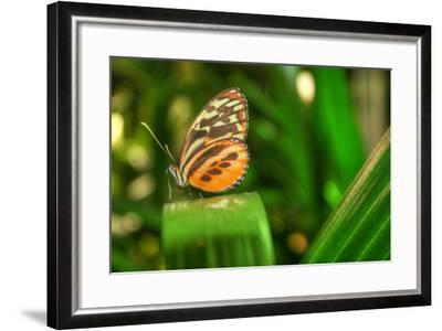 Butterfly 1-Robert Goldwitz-Framed Photographic Print
