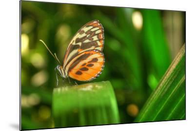 Butterfly 1-Robert Goldwitz-Mounted Photographic Print