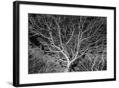 Costa Rica Tree-Moises Levy-Framed Photographic Print