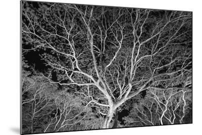 Costa Rica Tree-Moises Levy-Mounted Photographic Print