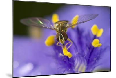 Flower, Bee-Gordon Semmens-Mounted Photographic Print