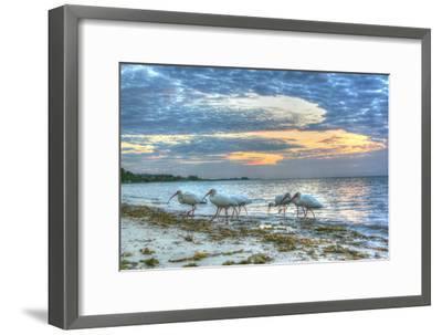 Ibis at Sunrise-Robert Goldwitz-Framed Photographic Print