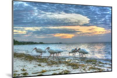 Ibis at Sunrise-Robert Goldwitz-Mounted Photographic Print