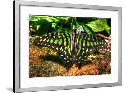 Butterfly 3-Robert Goldwitz-Framed Photographic Print