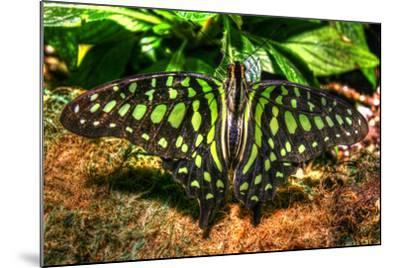 Butterfly 3-Robert Goldwitz-Mounted Photographic Print