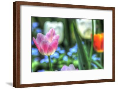 Tulips Four-Robert Goldwitz-Framed Photographic Print