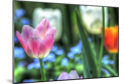 Tulips Four-Robert Goldwitz-Mounted Photographic Print