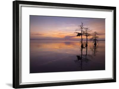 Three Trees on Sunset-Moises Levy-Framed Photographic Print
