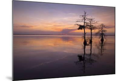 Three Trees on Sunset-Moises Levy-Mounted Photographic Print