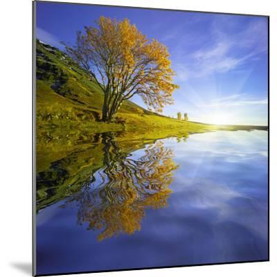 Yellow Tree Reflection-Moises Levy-Mounted Photographic Print