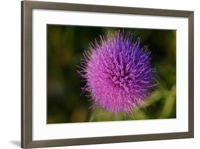 Shades of Nature 16-Gordon Semmens-Framed Photographic Print