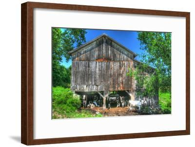 Old Barn and Cows-Robert Goldwitz-Framed Photographic Print