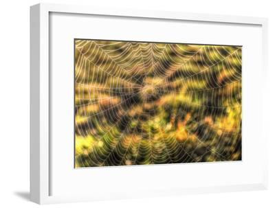 Morning Web-Robert Goldwitz-Framed Photographic Print