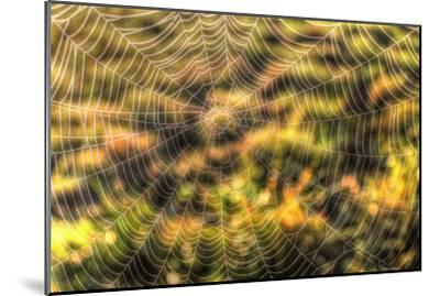 Morning Web-Robert Goldwitz-Mounted Photographic Print