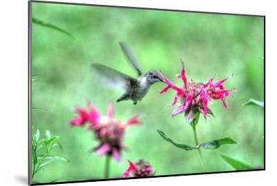 Hummingbird 2-Robert Goldwitz-Mounted Photographic Print