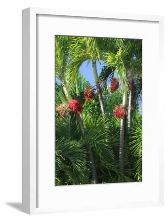 Palm Fruit Vertical-Robert Goldwitz-Framed Photographic Print