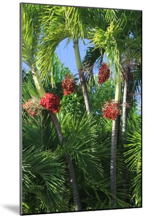 Palm Fruit Vertical-Robert Goldwitz-Mounted Photographic Print