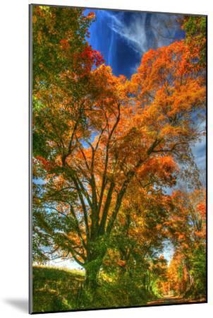Autumn Borden Road Vertical-Robert Goldwitz-Mounted Photographic Print