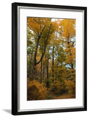 Inwood Park Fall Vertical-Robert Goldwitz-Framed Photographic Print