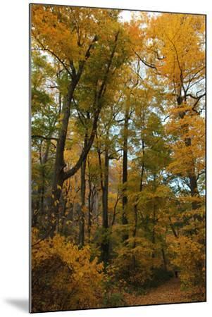 Inwood Park Fall Vertical-Robert Goldwitz-Mounted Photographic Print