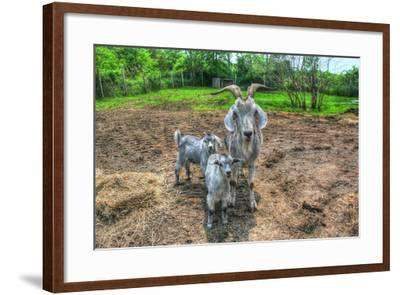 Goats-Robert Goldwitz-Framed Photographic Print