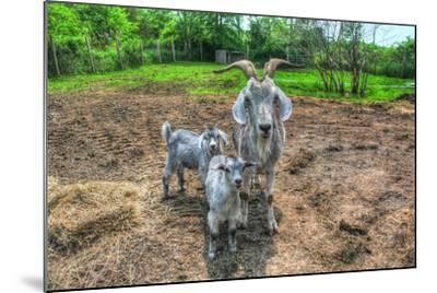 Goats-Robert Goldwitz-Mounted Photographic Print