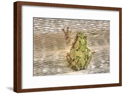 Tree Frog-Robert Goldwitz-Framed Photographic Print