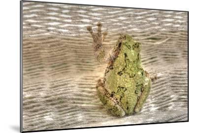 Tree Frog-Robert Goldwitz-Mounted Photographic Print