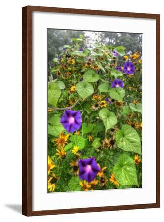 Morning Glories Vertical-Robert Goldwitz-Framed Photographic Print
