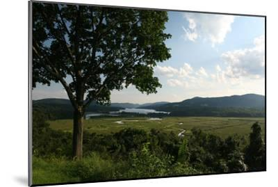 Hudson Highlands Tree Boscobell-Robert Goldwitz-Mounted Photographic Print