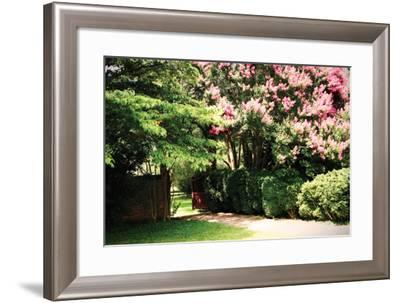 Crepe Myrtle II-Alan Hausenflock-Framed Photographic Print