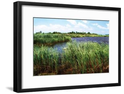 Back Bay IV-Alan Hausenflock-Framed Photographic Print